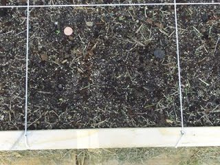 Lettuce Has Sprouted!