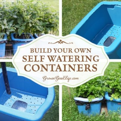 Self watering containers are an enclosed growing system that decreases moisture evaporation and offers a consistent water supply to your plants. It is made up of two chambers, the growing chamber and the water reservoir chamber. The growing chamber contains a wick that descends into the water reservoir that pulls water up into the growing chamber as needed for the plants. See how to make self watering containers out of some easy to find items.