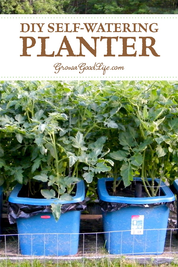 Make your own self-watering containers out of totes! Self watering containers are an enclosed growing system that decreases moisture evaporation and offers a consistent water supply to your plants.