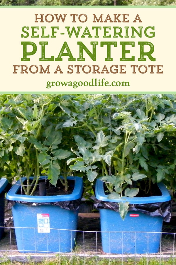How to Make a Self-Watering Container