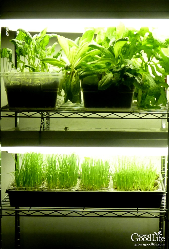Growing plants indoors is an enjoyable project for any gardener. Whether you want to grow herbs indoors, start your garden seedlings, cultivate an indoor garden, or provide some supplemental light to your houseplants during winter, this inexpensive DIY grow light shelf will help you raise healthy plants.