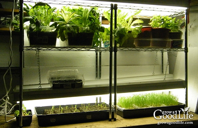 Build a grow light system for starting seeds indoors workwithnaturefo