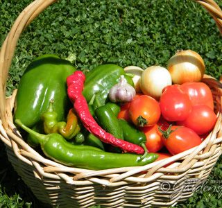 Preserving the Harvest: Zesty Salsa and String Beans