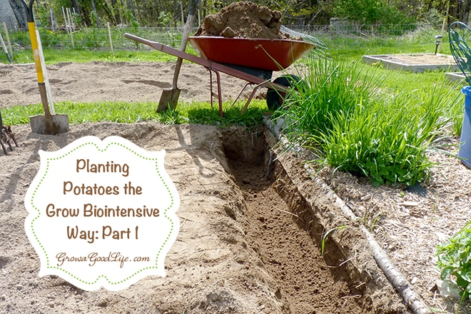 planting_potatoes_part1