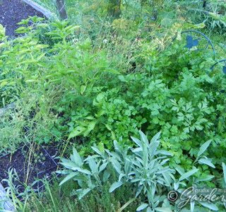 Preserving the Harvest: Herbs