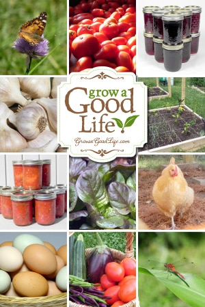 Grow a Good Life documents our journey to live a more self-sufficient life. Along the way, I write about our experiences growing our own food, backyard chickens, preserving the harvest, and living a simple life in rural Maine. You too can Grow a Good Life! The journey begins with one step…one act…one decision that can lead you to a more fulfilling lifestyle of self-sufficiency, control over the foods you eat, and the overall quality of life that you live. Visit growagoodlife.com to get started.