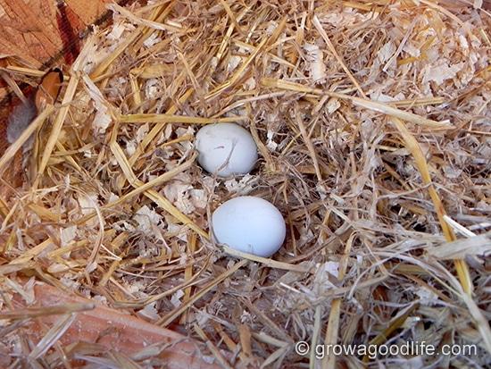 elizabeth-first-eggs