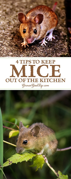 4 Tips to Keep Mice Out of Your Kitchen