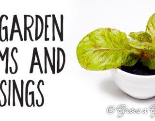 2014 Garden Dreams and Musings