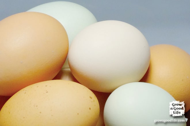 Over 60 Egg-Cellent Egg Recipe Collection | Grow a Good Life