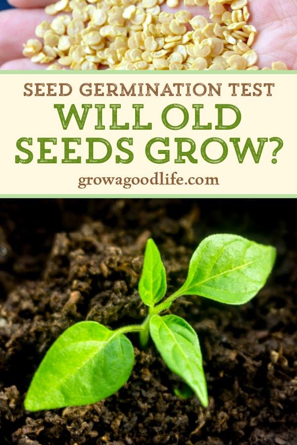 pepper seedling and pepper seeds