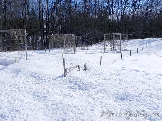 snow-covered-garden