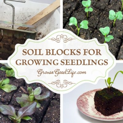 Transplanting seedlings grown in soil blocks is easy with no damage to the roots allowing the seedlings establish quickly into the surrounding soil.