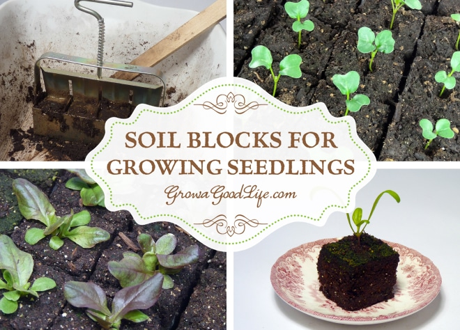 Soil Blocks for Growing Seedlings   Grow a Good Life