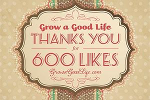 600-facebook-likes