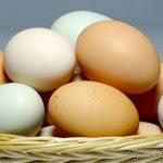 Eggs! Eggs! Glorious Eggs!
