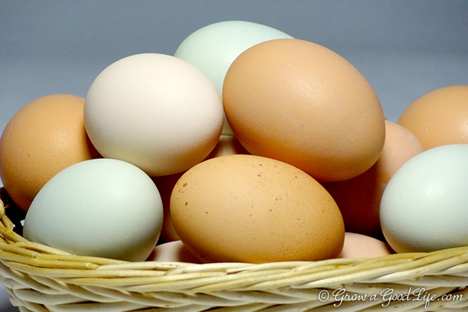 eggs-basket2