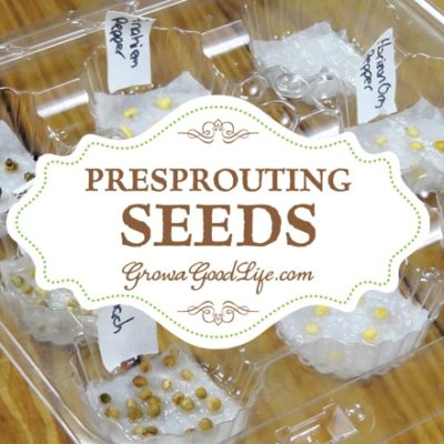 One of the most frustrating things about starting seeds is waiting for them to emerge from the soil. Pre-sprouting seeds germinates seeds before planting.
