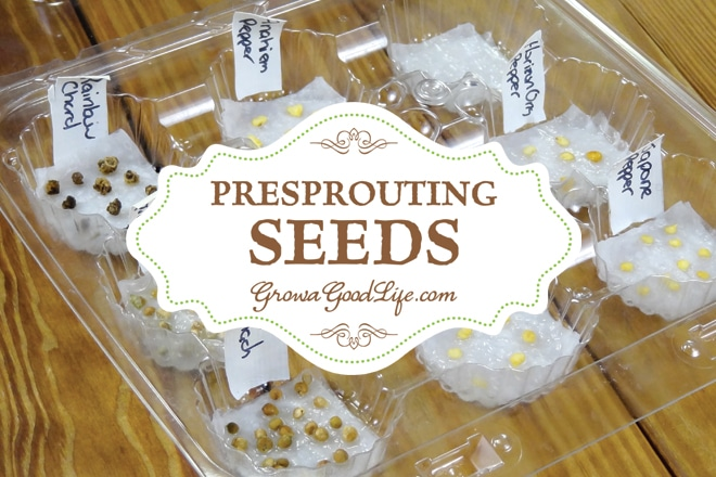 One of the most frustrating things about starting seeds is waiting for them to emerge from the soil. Pre sprouting seeds germinates seeds before planting.