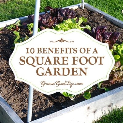 If you are just starting a garden or want to expand your growing space, the Square Foot Gardening method is worth considering. The beds are easy to build with no digging or tilling required. Read on for 10 benefits of square foot gardening.