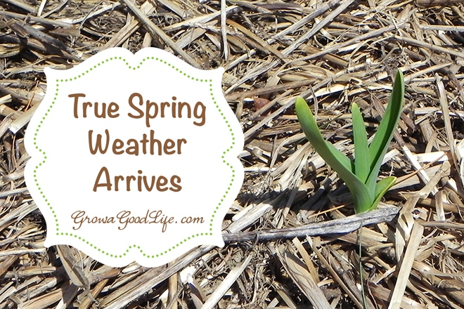 true_spring_weather_arrives