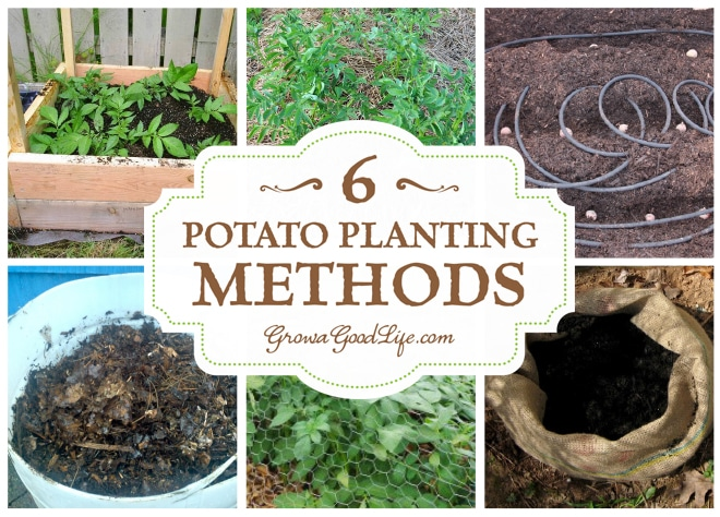 Growing Potatoes in the Backyard Garden 6 Different Methods from Grow a Good Life
