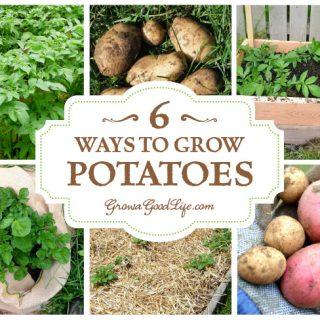 6 Ways to Grow Potatoes