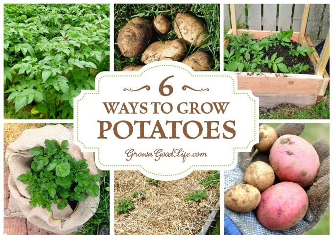 6 ways to grow potatoes for Different ways to prepare potatoes
