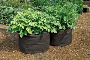 grow-potatoes-in-grow-bags