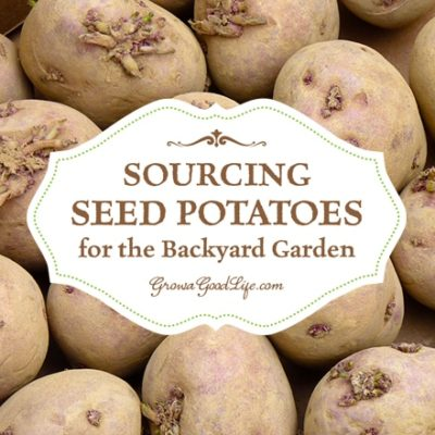 Sourcing Seed Potatoes for the Backyard Garden