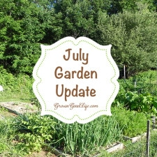 july-garden-update-photo