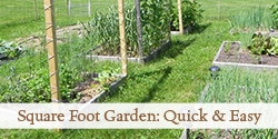 top-square-foot-garden-photo