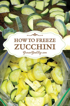 You can preserve zucchini by freezing in two ways, shredded or cut pieces. Thawed shredded zucchini can be used to make frittatas, quiche, and baked goods such as zucchini bread and muffins. Slices or cubed zucchini can be added frozen to stir-fry, pasta and soup.