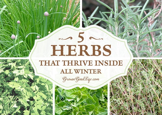 5 Herbs that Thrive Inside All Winter by Grow a Good Life - featured at Natural Family Friday