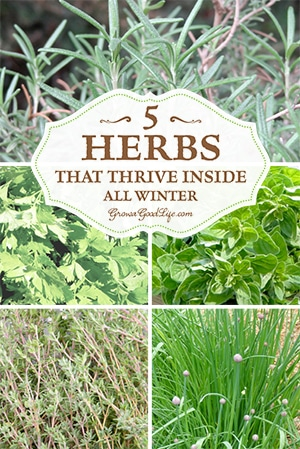 Grow herbs indoors 5 herbs that thrive inside all winter - Herbs that can be grown indoors ...