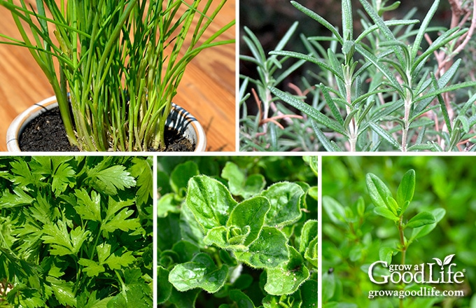 Grow Herbs Indoors: 5 Herbs that Thrive Inside
