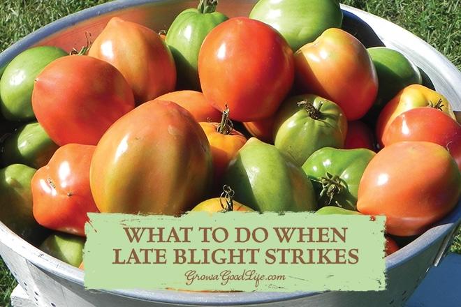 late-blight-strikes-growagoodlife