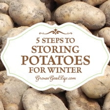 5 Easy Steps to Storing Potatoes | Grow a Good Life