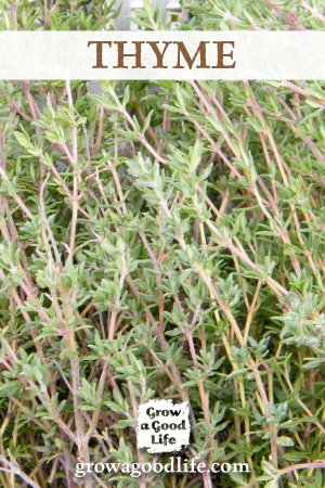 Grow Herbs Indoors: Thyme is just one of the herbs that can grow indoors during the winter. See the other herbs that can grow successfully with low light and cooler temperatures.