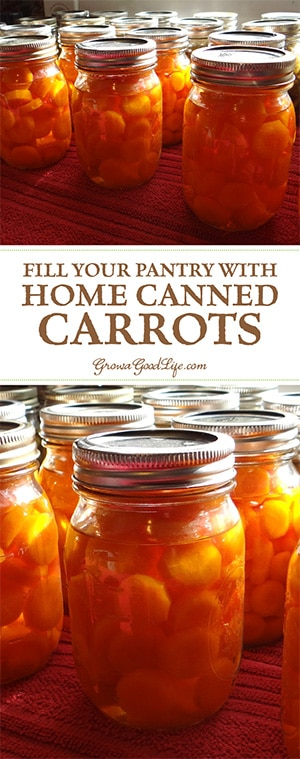Canning carrots is a great way preserve them when abundant and in season. Jars of carrots in your pantry will come in handy for quick meals, soups, or stews. Take advantage of the seasonal harvests to stock you pantry shelves with home canned carrots