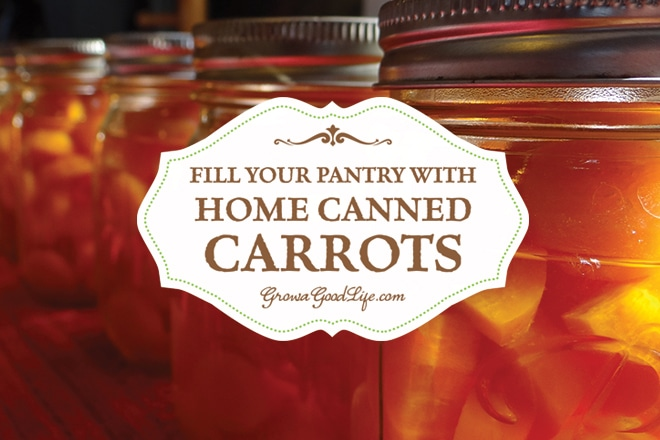 Take advantage of the summer and fall harvests to stock your pantry shelves with home canned carrots and build your home food storage.