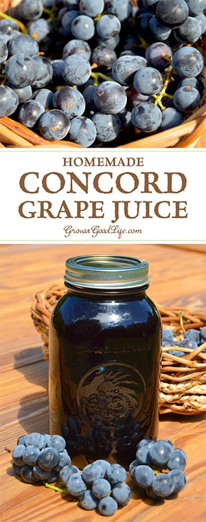 Learn how to make and preserve your own Concord grape juice at home! You control the additives and sugars.