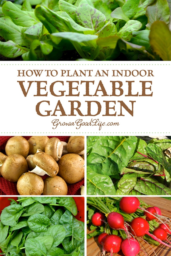 Growing herbs and vegetables indoors is a great way to supplement your diet with fresh, organic foods. Learn how to setup your indoor growing area and discover 13 easy vegetables to grow indoors.