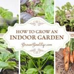 How to Grow an Indoor Garden