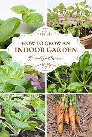 How to Grow an Indoor Garden | Grow a Good Life