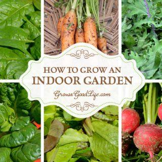 Craving fresh harvests during the winter or lack outdoor gardening space? Then start an indoor garden.