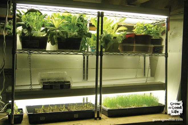 Build a Grow Light System for Starting Seeds Indoors | Grow a Good Life