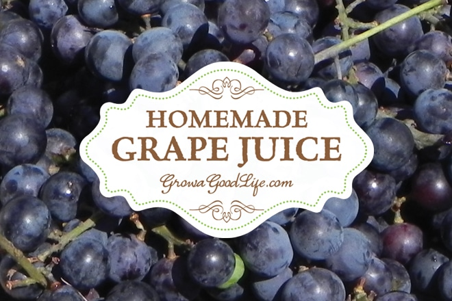 Homemade Concord Grape Juice – No Added Sugar
