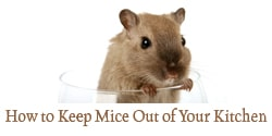 How to Keep Mice Out of Your Kitchen