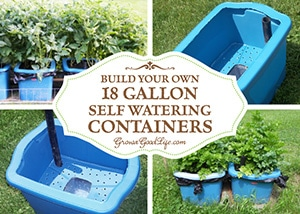 Many versions of self-watering containers, also known as self watering grow boxes, self watering pots, and self-watering planters are sold online, but you can make them yourself for a fraction of the cost out of some easy to find items. See how you can build your own out of an 18-gallon storage tote.